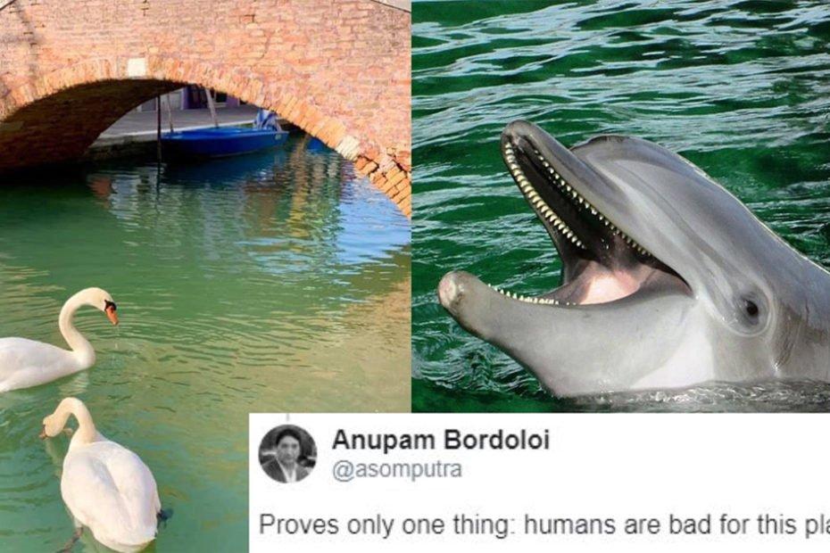 Delfini-si-lebede-in-Venetia