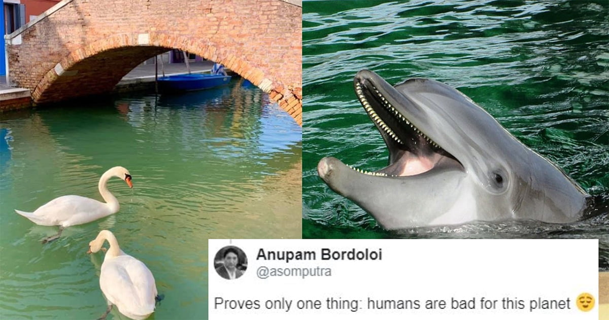 Delfini È™i lebede pe canalele din VeneÈ›ia